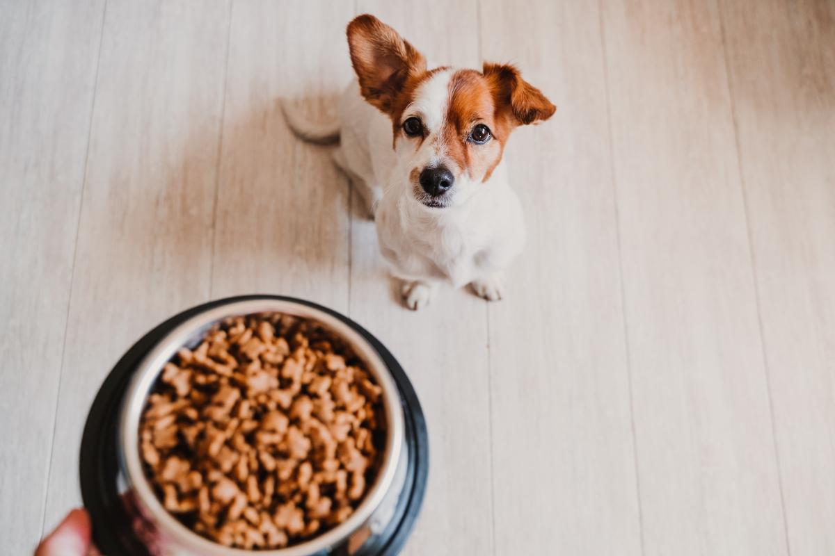 alimentación canina: comida industrial